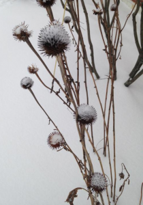snow-covered seed-heads