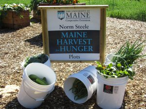buckets of fresh produce and the sign for UMaine Extension Maine Harvest for Hunger Norman Steele Plots