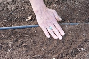 planting seeds in a vegetable garden