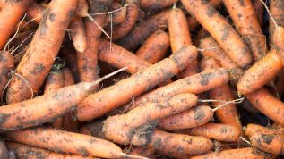unwashed carrots
