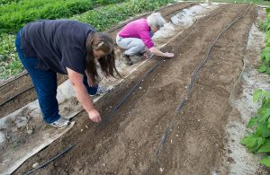 Two women plant seeds in vegetable garden