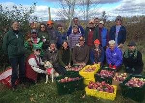 Master Gardener Volunteers Gleaning Apples at Johnston's Apple Orchard in Ellsworth