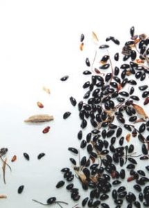 a variety of seeds