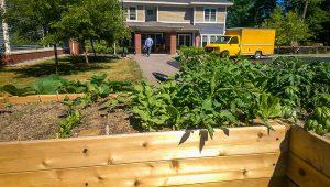Raised bed garden at Westrum House in Topsham