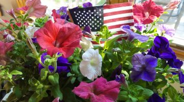red, white, and blue petunias with American flag