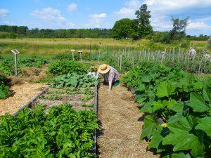 mulched pathways in garden at Brae Maple Farm