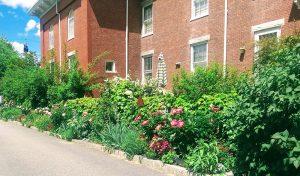 border garden in bloom