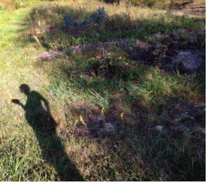 shadow in the garden