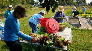 BBC Camp Volunteers washing produce