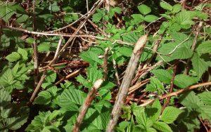 raspberry plant damage