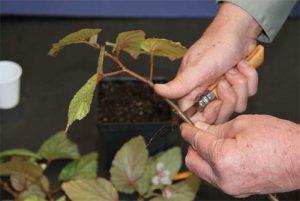 Cutting the stem