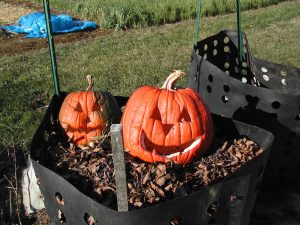 Compost pumpkins. Photo credit to Dave Fuller.