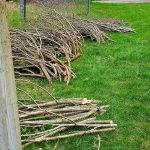 Piles of twig branches ready to use for building a Twiggy Trellis