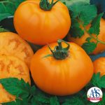 Tomato Chefs Choice Orange F1