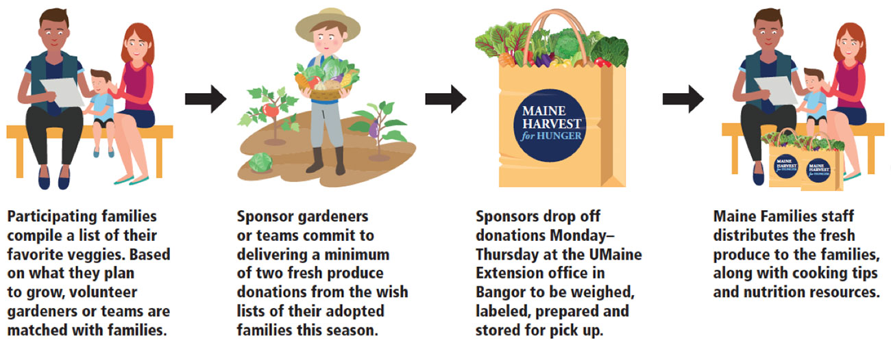 Illustrations showing: 1) Participating families compile a list of their favorite veggies. Based on what they plan to grow, volunteer gardeners or teams are matched with families. 2) Sponsor gardeners or teams commit to delivering a minimum of two fresh produce donations from the wish lists of their adopted families this season. 3) Sponsors drop off donations Maonday-Thursday at the UMaine Extension office in Bangor to be weighed, labeled, prepared and stored for pick up. 4) Maine families staff distributes the fresh produce to the families, along with cooking tips and nutrition resources.