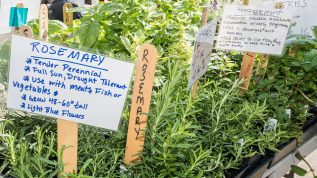 Rosemary, basil, peppermint and assorted herbs on sale by vendors at the U.S. Department of Agriculture (USDA) Farmers Market in Washington, D.C.