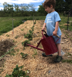 Booker Watering Strawberry Plants.