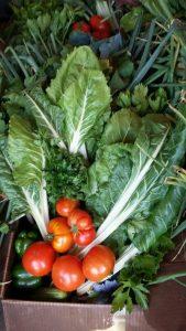 Box full of veggies