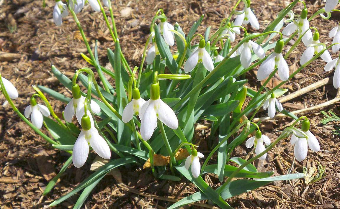featured image for Maine Home Garden News — March 2020