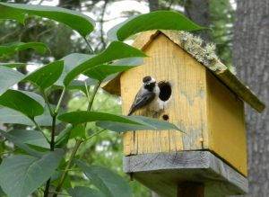 chickadee perching on birdhouse