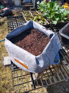 Grow bag with soil