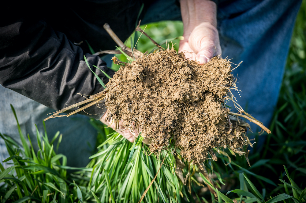 featured image for Episode 3: Preparing Your Garden Soil