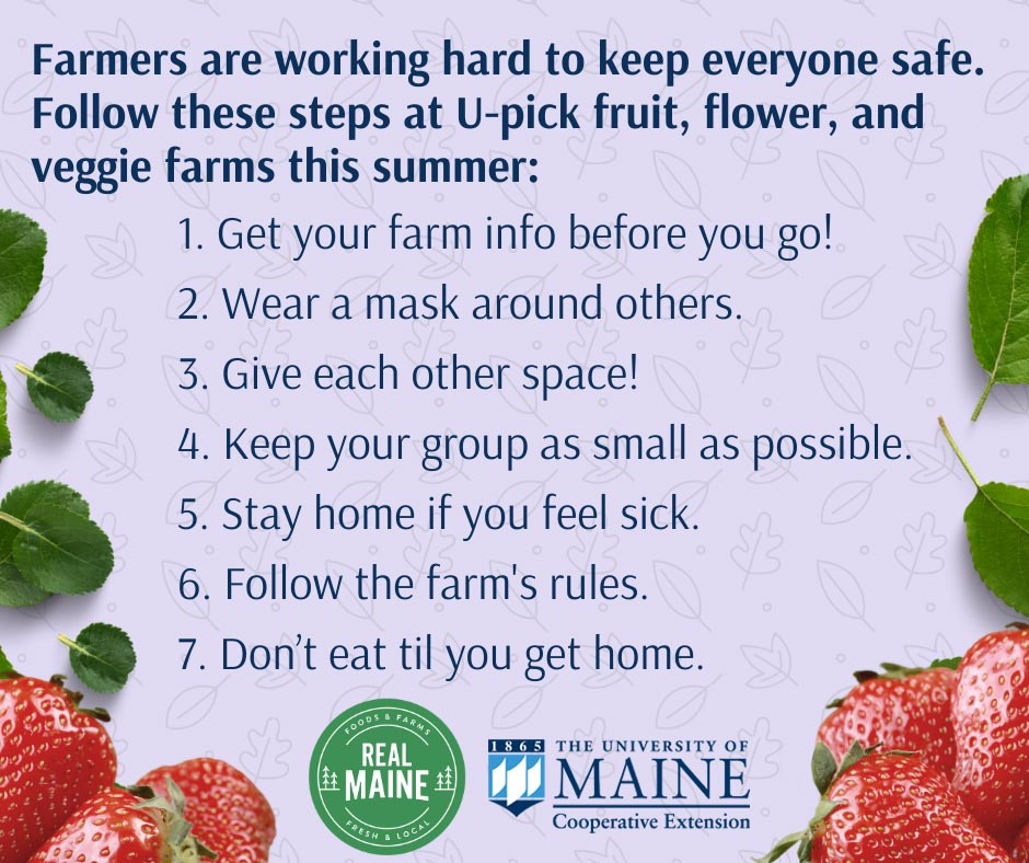 Farmers are working hard to keep everyone safe. Follow these steps at U-pick fruit, flower, and veggie farms this summer: 1. Get your farm info before you go! 2. Wear a mask around others. 3. Give each other space! 4. Keep your group as small as possible. 5. Stay home if you feel sick. 6. Follow the farm's rules. 7. Don't eat til you get home. RealMaine Logo and University of Maine Extension Logo