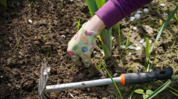 Weeding the garden with a hand tool