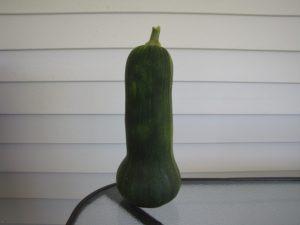 Green butternut squash