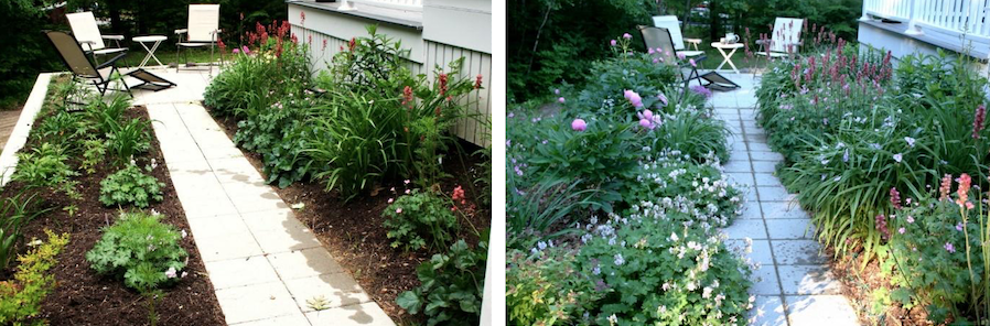 (left) newly planted garden with space between plants; (right) mature garden filled in after several seasons