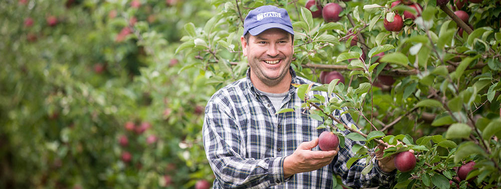 apple producer in orchard