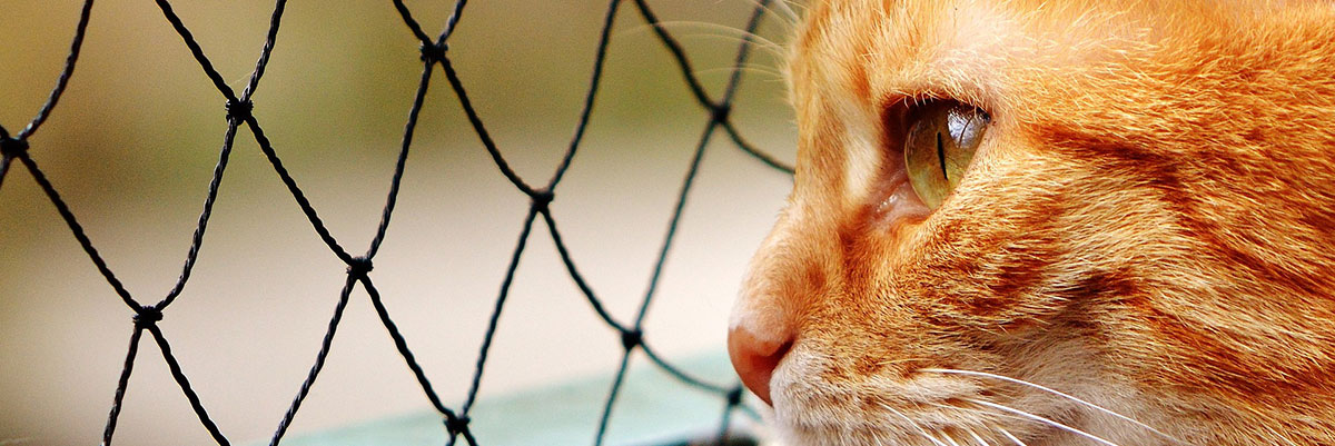cat looking through a fence