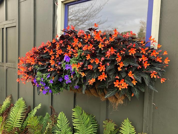 Featured Container Garden