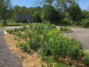 Traffic island made into a perennial garden