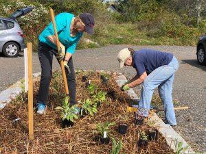 Volunteers planting a garden in a traffic island