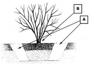 Diagram, dig wide and shallow