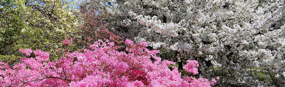 flowering trees and shrubs