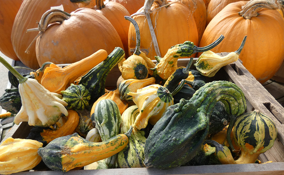 featured image for Maine Home Garden News — October 2021