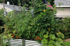 This small 3.5 x 6.5 planter takes advantage of vertical space with a trellis made of saplings supporting tomatoes, pole beans, cucumbers, peas, and squash.