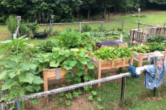 This garden features raised beds overflowing with vegetables, a low fence to keep out wildlife, a scarecrow and birdhouses.