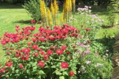 Monarda 'Jacob Cline', Monarda fistulosa, Ligularia 'The Rocket', and yarrow all abuzz with pollinators.