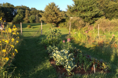 A bed of flowers and vegetables is a community garden plot in Eliot that was converted over the course of 6 years to organic and no-till.