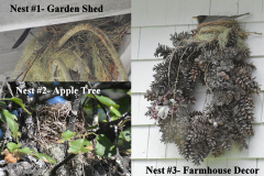 Plentiful nests are a sign of a successful effort to welcome birds into the landscape. This gardener discovered nests by their garden shed, apple tree and even on top of a wreath.