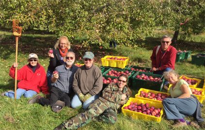 Extension volunteers, in an orchard, gleaning apples