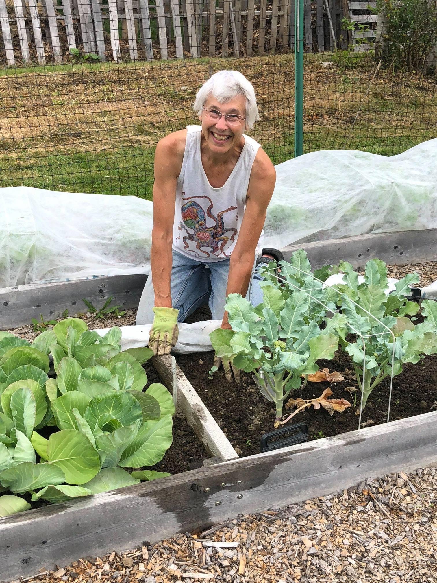 Master Gardener tending raised beds