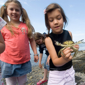 Kids on the beach holding a crab