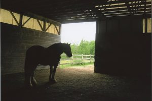 Horse in Barn, a photo taken by Zoe from Rails'n'Trails
