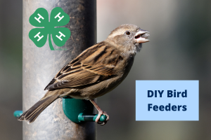 DIY Bird Feeder Event photo
