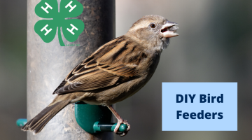 DIY Bird Feeder Event photo