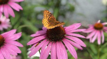 Rhoades Butterfly Park